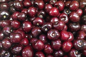 fruta de temporada zaragoza