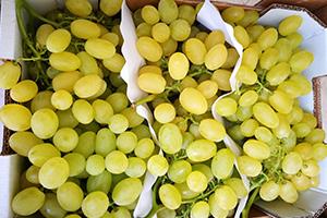 fruta de temporada para oficinas zaragoza