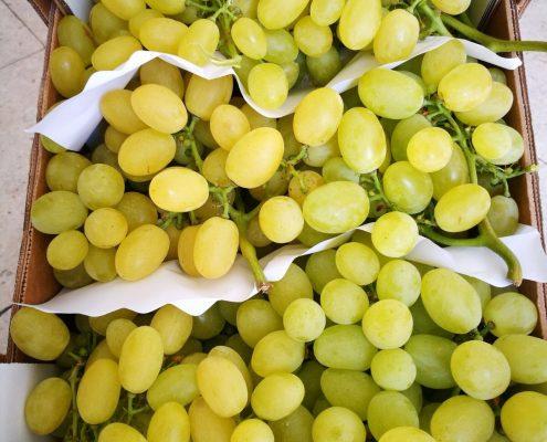 Comprar uva en Zaragoza